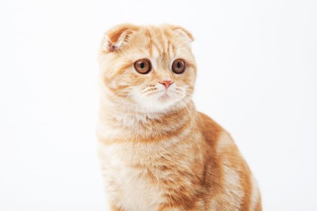 猫の毛づくろいは生きるために必要だった⁉︎猫が身体を舐める理由
