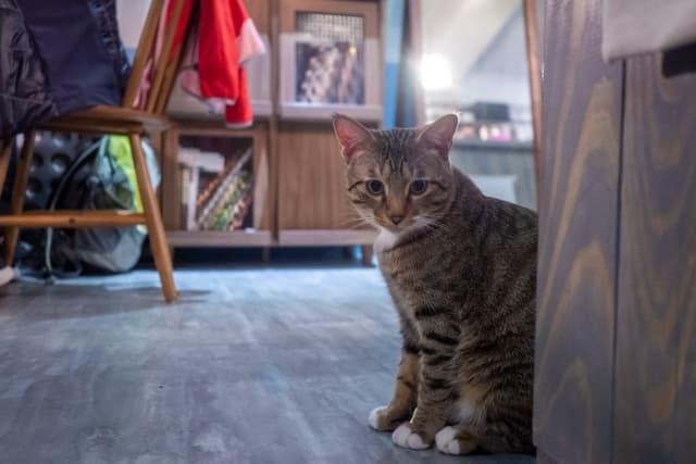 ビリっとくる猫の静電気。原因とその対処方法を解説!