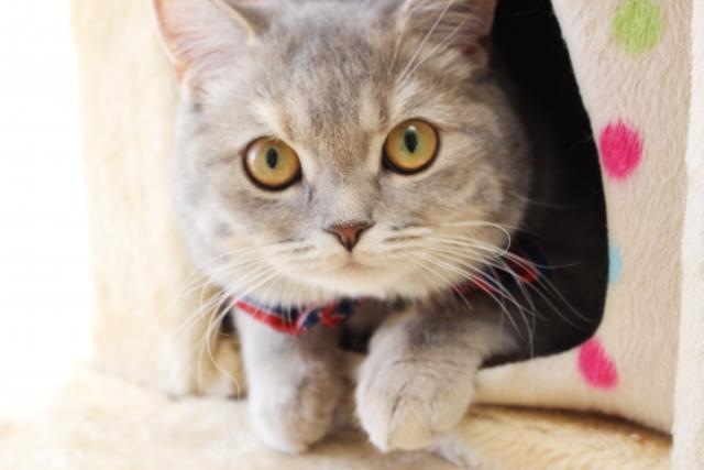 猫の感情の読み取り方!尻尾・表情・体勢・鳴き声で自分の感情を表現している!?