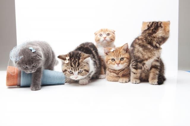 猫がこたつを好きな理由 注意点がいくつかあるので確認しよう!