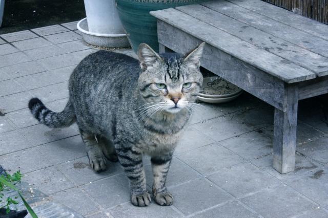 猫のあまり知られていない生態・習性・について詳しく解説!可愛らしい仕草には深い意味がある!
