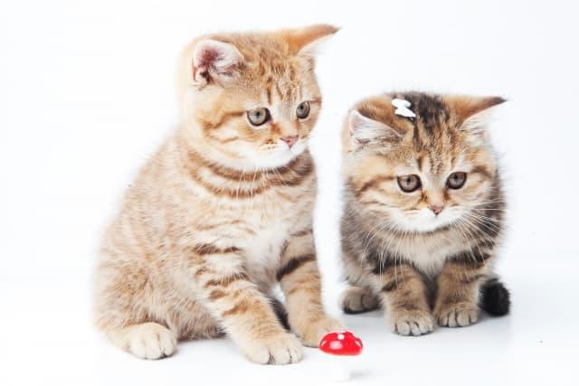 しっぽが立つのは〇〇だから⁉︎猫の気持ちはしっぽから読み取れる!