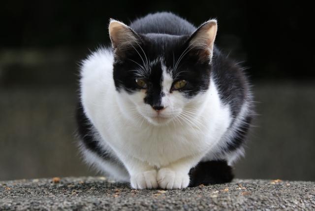 猫は神様?猫にまつわる神話を知って更に謎が深まるコラム