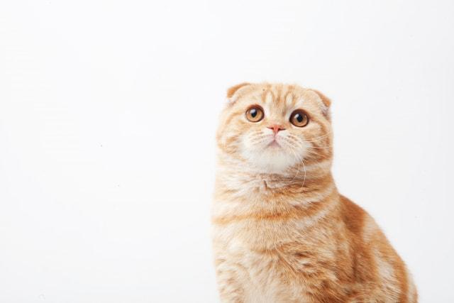 猫がお風呂嫌いな理由 無理して入れる必要はない!?