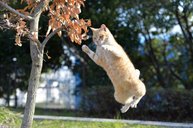 猫のジャンプ力が高い理由|高い所は怖くないのか?
