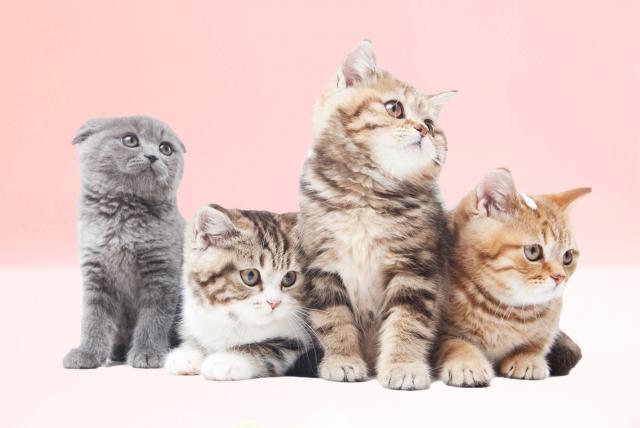 性別、品種などによって変わる?猫の性格