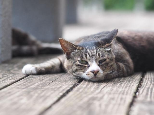 猫の肉球にはどんな役割がある?体調を把握することもできる