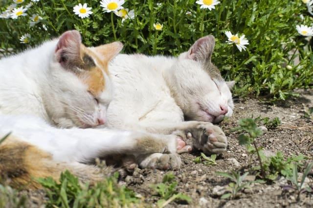 猫もやきもちを妬いちゃう!嫉妬深い猫がとる行動とは!?