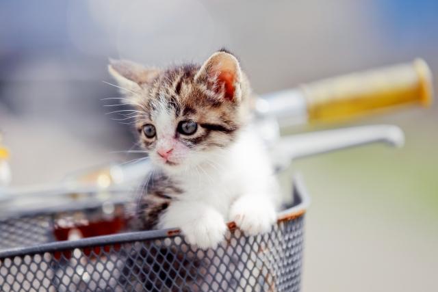 猫が箱に入りたがるのは〇〇のためだった!?猫が箱を好きな理由