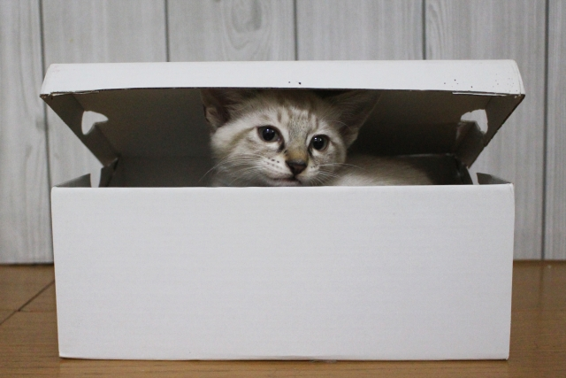 猫がかくれんぼを始める理由!かくれんぼが好きだから?詳しく調べてみました。