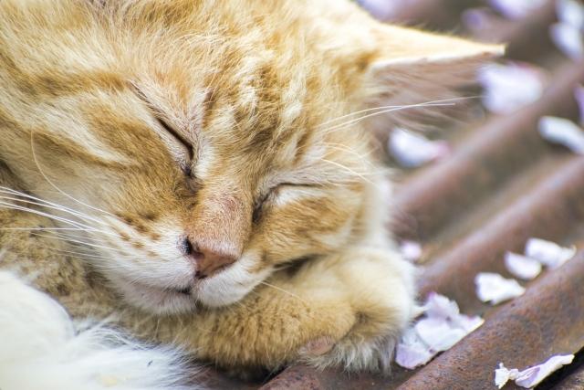 眠い時にとる猫のかわいい仕草は?詳しく観察していきましょう!