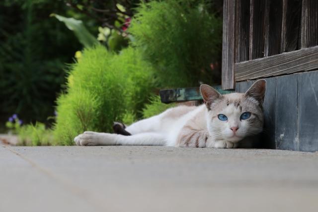 猫の頭突きは飼い主のことを〇〇な証!知っておきたい猫の豆知識