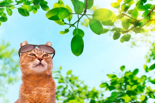 猫のとある一日を観察してみる!猫は一日中何をやって生活しているのか?