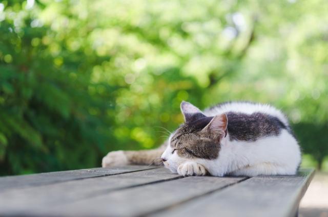 猫は心を許した人だけにする仕草がある!その仕草がかわいらしい!!