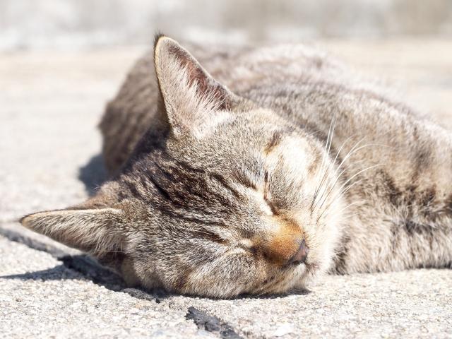 猫がため息をする理由は?何か理由があるのか詳しく調べてみました!