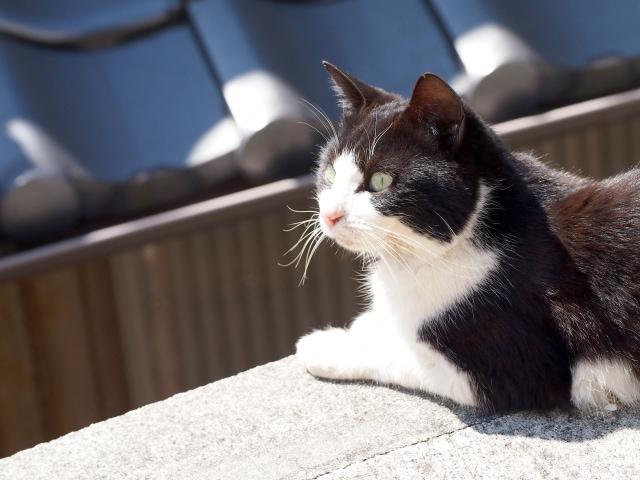 猫が夜鳴きする原因と対処方法|困った時にするべきこと