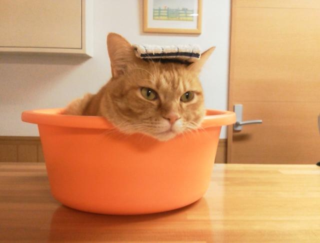お風呂に入っていると猫が来るのはなぜ?どういう意味があるのでしょうか!