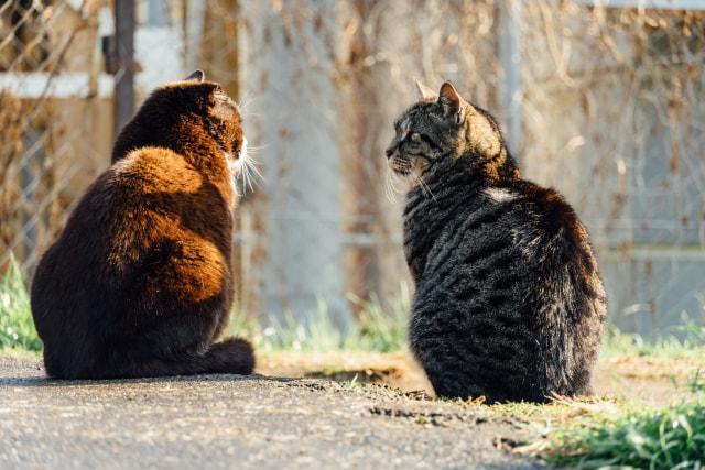 猫の毛が異常に抜けるときは要注意!?抜け毛が気になるなら確認しよう!
