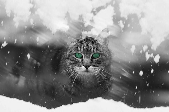 猫がわがままなのはどうして?わがまま猫はどうお世話する?