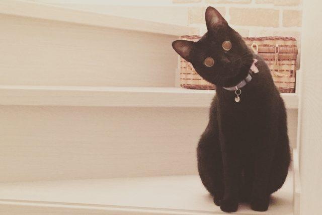 猫は意外と心配性です!飼い主の事を心配している?その行動とは!