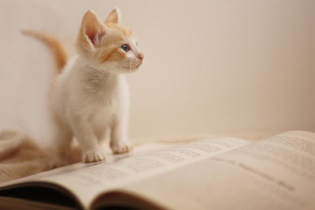 猫がゴロゴロ鳴くのはどうして?さまざまな役割がある!