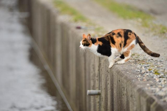 一人暮らしが猫を飼う時に注意するべきこと|少し覚悟が必要かも…