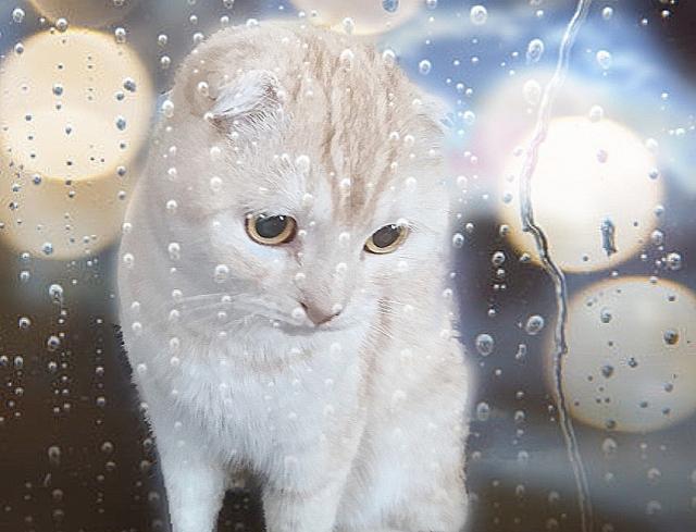 猫も不快に感じている梅雨!ジメジメの梅雨時期を乗り切り方法!