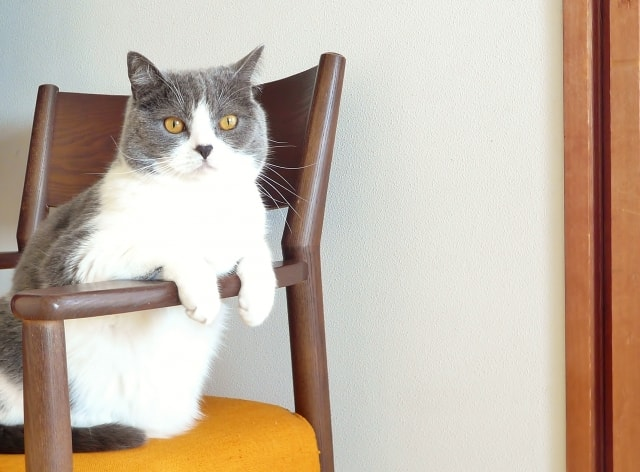 猫が下痢になる原因とは?下痢になりにくいペットフードの選び方