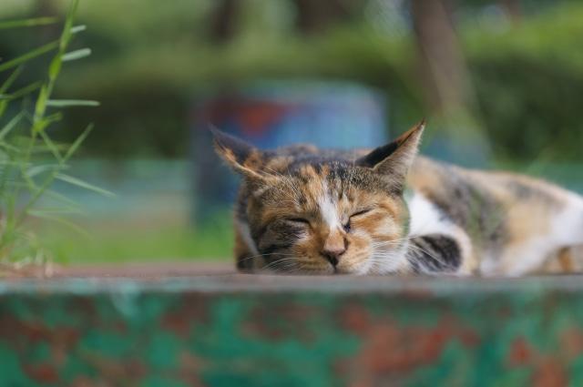 猫に耳掃除は必要なのか?耳の手入れの重要度は?