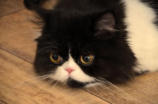 猫がイライラしている時や嫉妬している時に起こす仕草や行動とは?