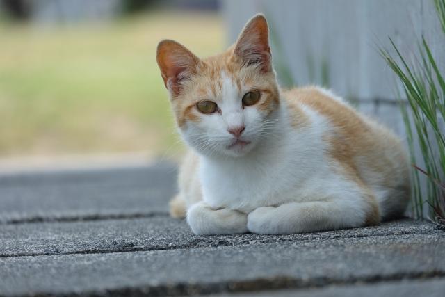 猫が空中などの空間を見つめている理由。幽霊が見えるってホント?