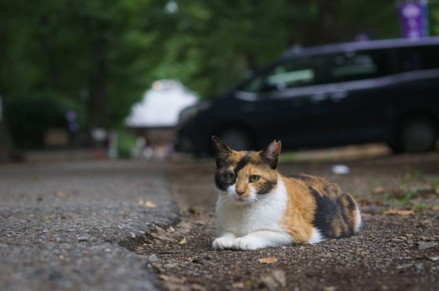 猫を飼い始める前に知っておくべきこと|猫に関する豆知識