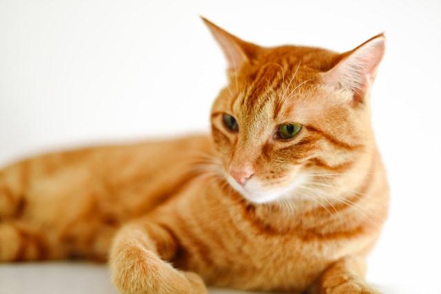 猫を多頭飼いするときの注意点|喧嘩やストレスを未然に防ごう