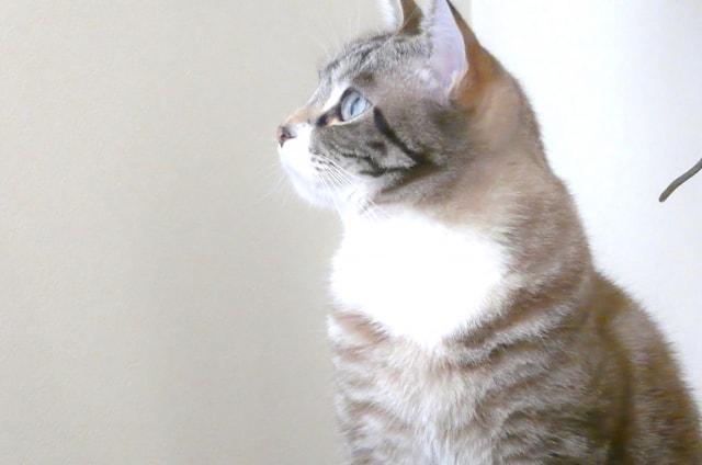 猫にも食べ物の好き嫌いがある?猫の偏食を治す方法
