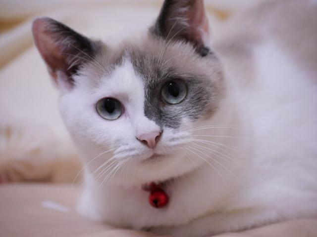 腕枕を要求してくる猫の心理とは?快く腕枕をしてあげよう!