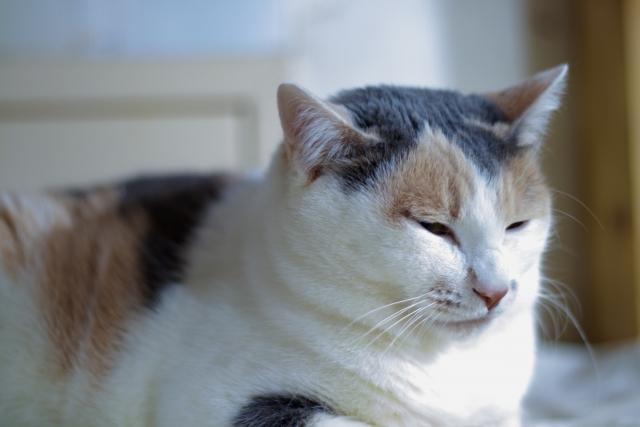猫は飼い主に似るって本当?なぜそう言われているのか調べてみました!
