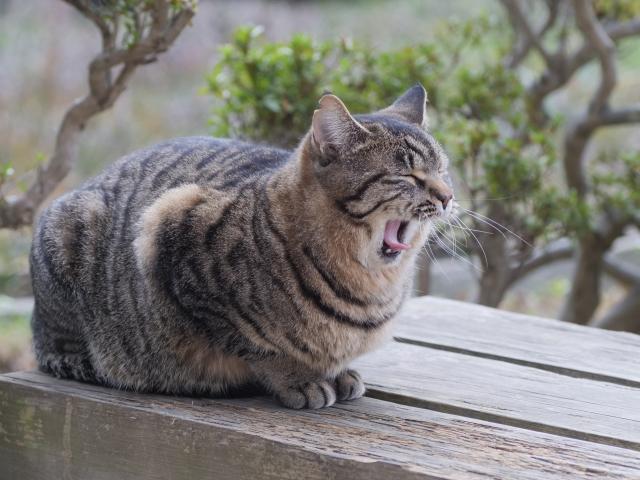 猫が飼い主に頭突きをしてくるのはなぜ?どのような気持ちの表れなのでしょうか?