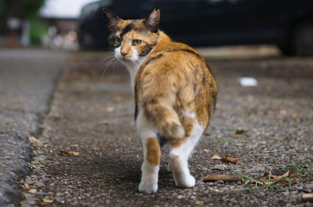 飼い主を信じている猫が行う行動。その行動は猫の気持ちの表れかもしれません!