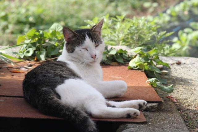 猫が安心するためにこっそりと確認していることがあるって知っていましたか?