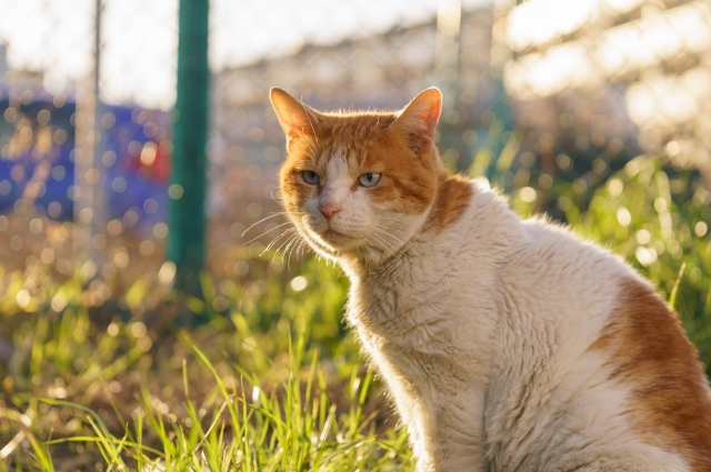 猫のストレスをマッサージで改善!ストレスを緩和する猫のつぼとは?