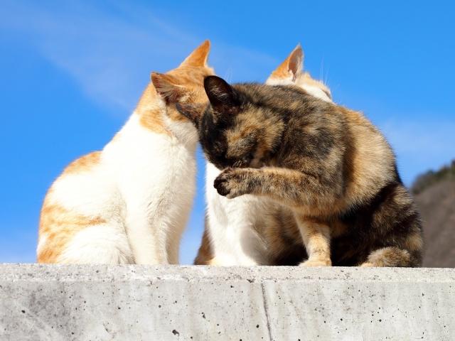 猫が湿布をなめると危ない?なぜ危ないのか?対策方法も含めてご紹介します。