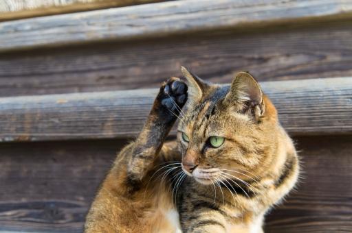 猫に魚はダメ!食べたりしてはいけない理由を詳しく調べてみました。