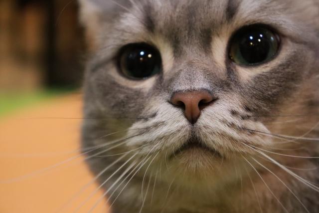 【これであなたももっとネコと仲良くなれる】目から汲み取る猫の気持ち