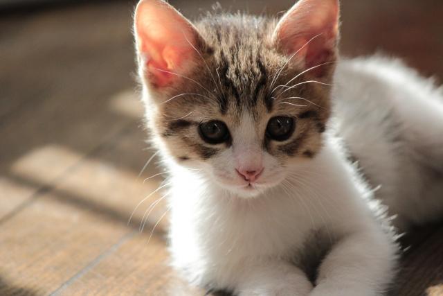 今さら聞けない飼い猫の選び方!これから猫を飼う人は必見