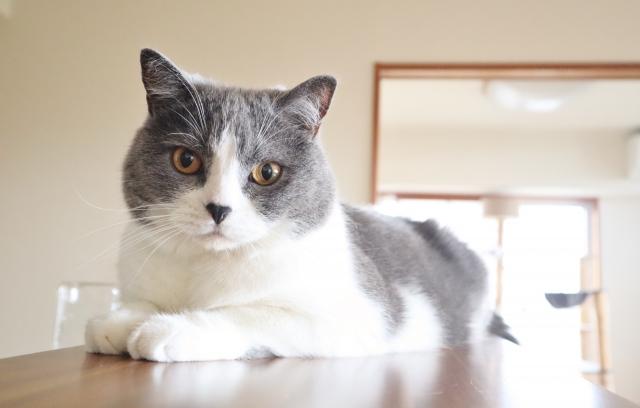 猫も人間も楽しい!一緒に過ごすお部屋づくりのポイント