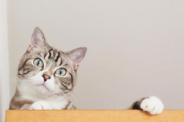 「猫の大運動会」について!愛猫が走るのをやめさせる良い方法とは?