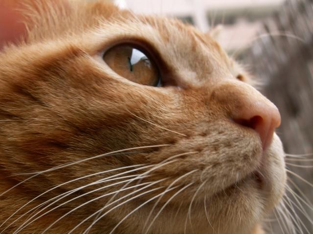 かわいらしいヒゲにこんな重要な役割が!?猫のヒゲの役割や注意したいこと。