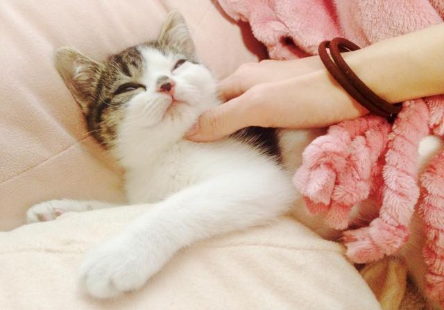 猫が喉を鳴らすゴロゴロの効果!ゴロゴロが人間を救う?!