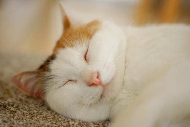 人が近づくと猫が喉を鳴らす理由知ってる?音の高さがポイント!