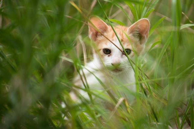 愛猫に合ったキャットフードを見つけよう!